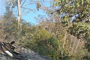timber including grass grass kept in gaushala in deer panchayat