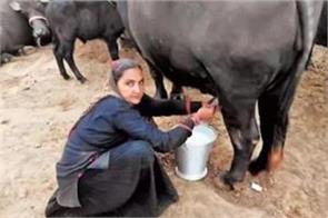 this woman became an example earns 1 crore rupees by selling milk