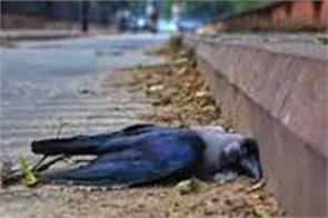 9 more birds found dead