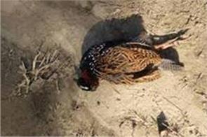 14 more birds found dead in the city