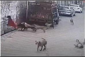 12 dogs attack up on girl