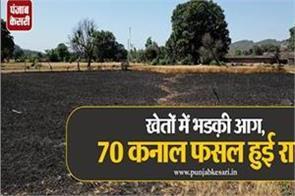 70 kanal crop destroyed in fire in vijaypur samba