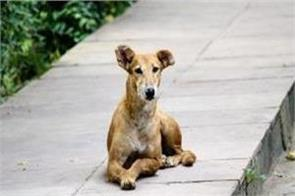 mumbai stray dog brutally beaten to death