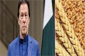 pakistan to import 4 million metric tonnes of wheat