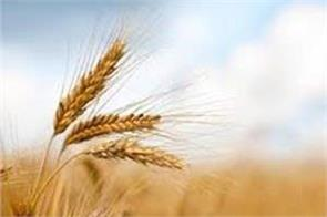 farmers protest in samba for wheat rates