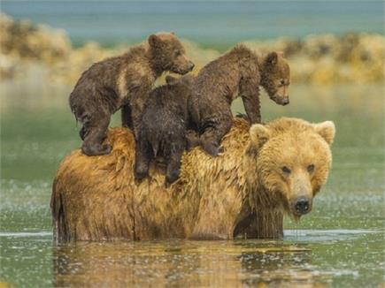 इस नेशनल पार्क में हैं विभिन्न प्रजातियों के जानवर, लोगों को अपनी ओर...