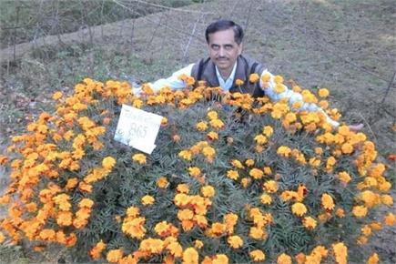 इस वैज्ञानिक ने एक पौधे पर खिलाए गेंदे के 865 फूल (Watch Pics)