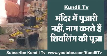 Kundli Tv- मंदिर में पुजारी नहीं, नाग करते हैं शिवलिंग की पूजा
