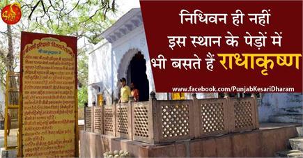 Krishna Janmashtami: निधिवन ही नहीं इस स्थान के पेड़ों में भी बसते...