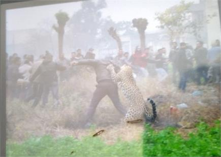 जालंधर में घुसा बेखौफ तेंदुआ,लोगों में दहशत