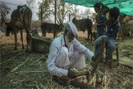 गौ सेवक पद्मश्री शब्बीर सैय्यद, 50 साल से 50 एकड़ जमीन पर चारा उगाकर...