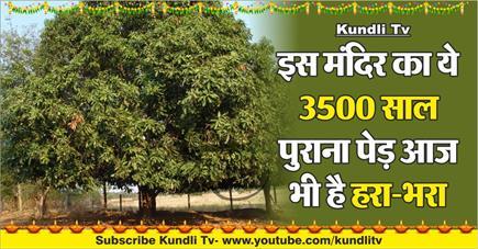 Kundli Tv- इस मंदिर का ये 3500 साल पुराना पेड़ आज भी है हरा-भरा