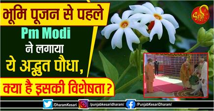 भूमि पूजन से पहले Pm Modi ने लगाया ये अद्भुत पौधा, क्या है इसकी...