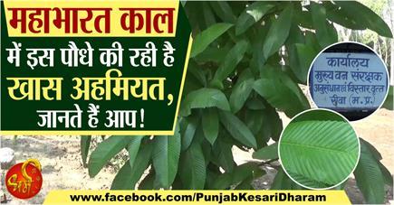 महाभारत काल में इस पौधे की रही है खास अहमियत, जानते हैं आप!