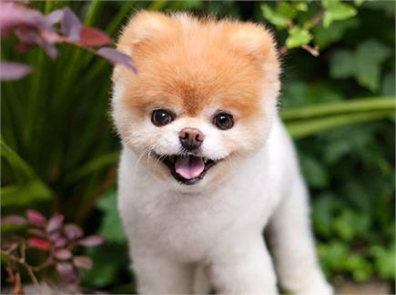 विश्व के 'सबसे प्यारे कुत्ते' की दिल टूटने से मौत, देखें तस्वीरें