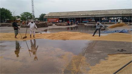 किसानों पर बरसा कुदरत का 'कहर', पानी-पानी हो गई 'मेहनत'