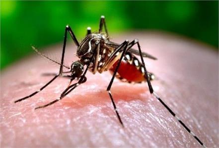 dengue fever patients increase in pakistan