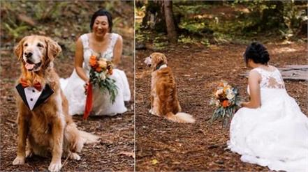 bride did a wedding shoot with   dog    pictures viral