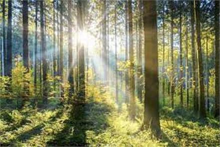 planting these trees will keep generations happy will end the difficulties
