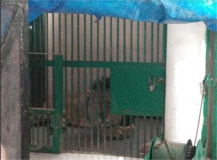 chattbir zoo video viral