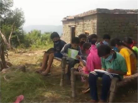 here children study online by climbing trees