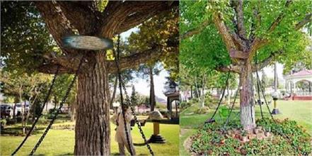 this tree has been arrested for 121 years you will be stunned