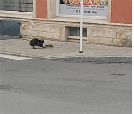 funny viral videos of cat and rat