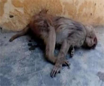 ballia a case against a person on the charge of killing a monkey