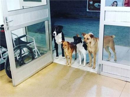 dogs waiting for homeless man outside hospital entrance photo viral