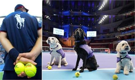 now the ball boy will come with a dog from the tennis court