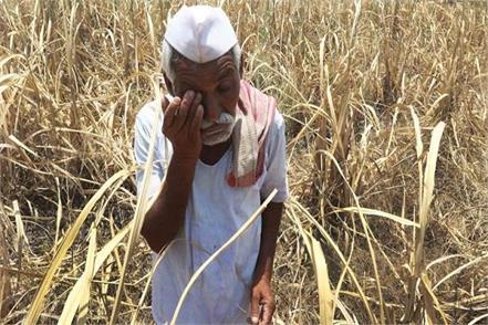 farmer suicides in debt in maharashtra