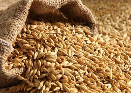 barley water can control your diabetes and obesity