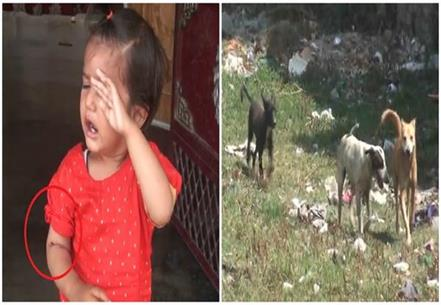 horror dog terror 17 month old baby girl made victim