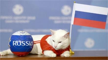 achilles cat predicts russia win in world cup opening match