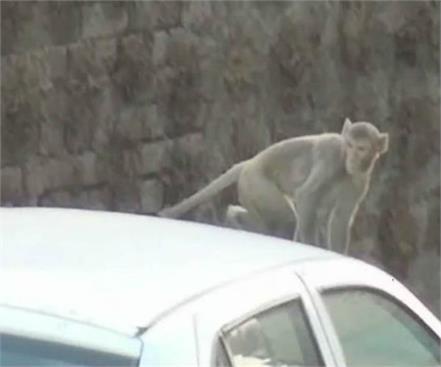 monkeys fly bag full of notes