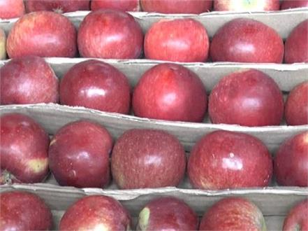 bhatta kufar mandi in taidman apple of predominancy