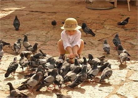 pigeons beat health problem and disease