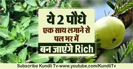 these 2 plants will make you very rich