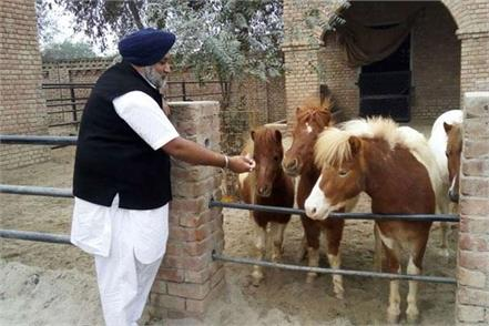 in the usa sukhbir badal bought a five million horse