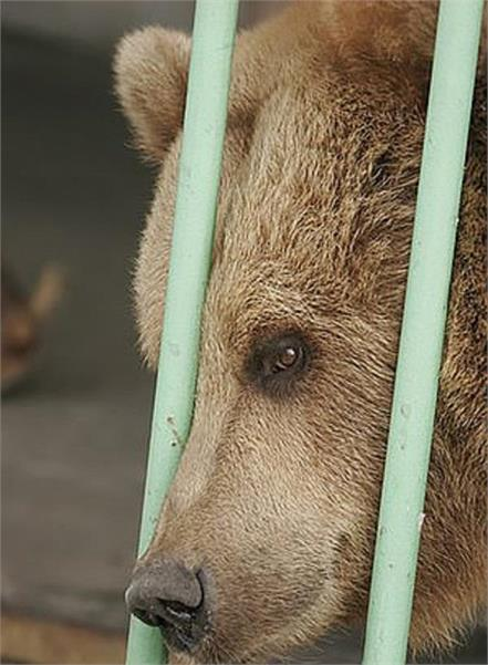 the bear served 15 years in prison with dangerous criminals