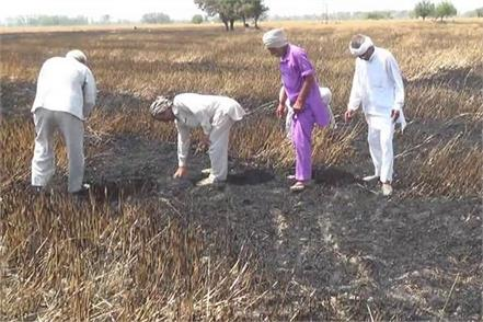 fire in fields 25 acre crops burnt