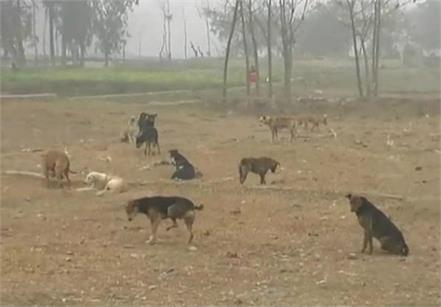 dog eating bone meat factories