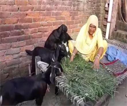 mother you salute selling goats son made judge