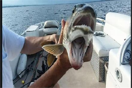 fish with  two mouths  caught viral image makes people curious