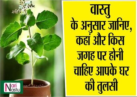 according to vastu where the basil should be placed in your house