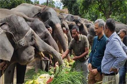 elephants of dudhwa park
