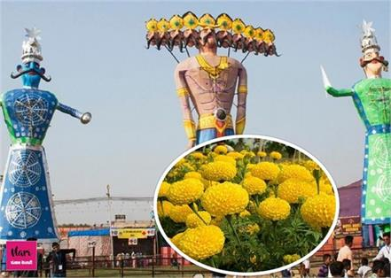 marigold flowers on dussehra celebration