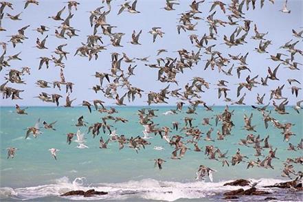 gandhinagar cms report study birds
