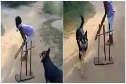 dog playing cricket with kids