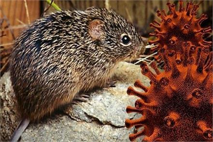 is the hantavirus more dangerous than corona